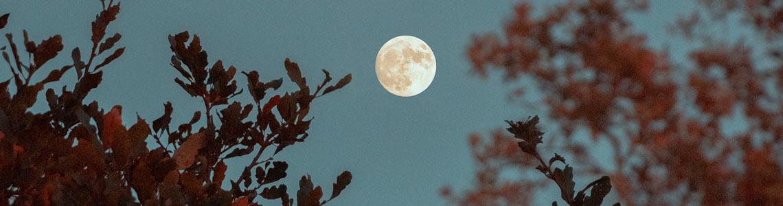 Volle maan door de bomen