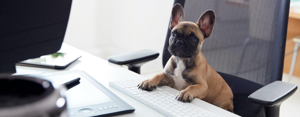 neem je hond mee naar je werk dag