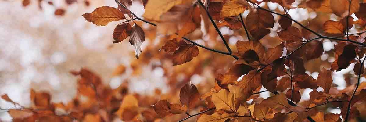 de voordelen van de herfst en de winter