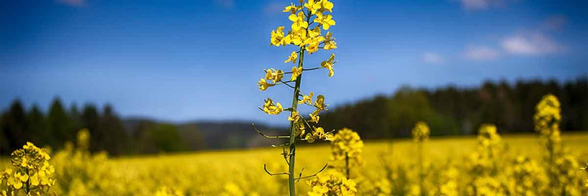 internationale dag van de biodiesel